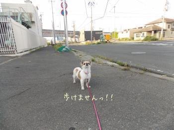 20150809_10.jpg