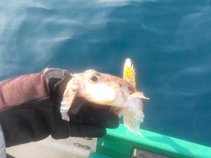 DSCN0782 - しらない魚