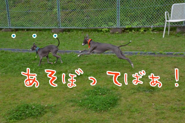 DSC_6459_20150713150130193.jpg
