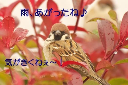 010_201501061804375dd.jpg