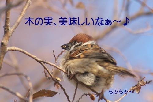 030_20150109223721aba.jpg