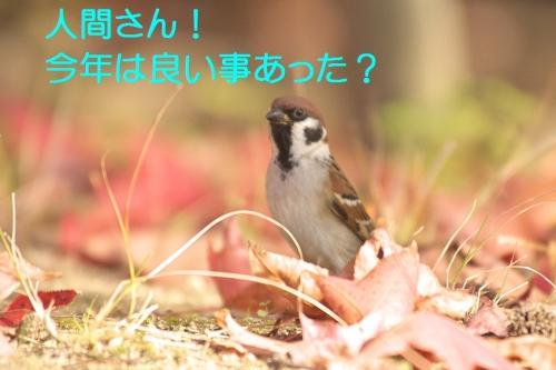 040_201412302055145d3.jpg