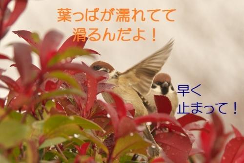 040_2015010618044164e.jpg