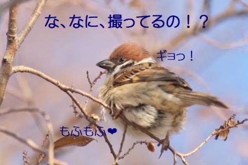 040_20150109223725589.jpg