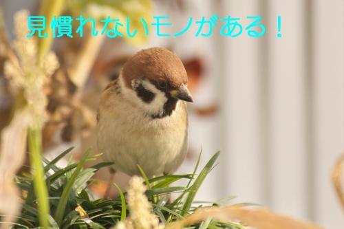 040_201501100137364fb.jpg