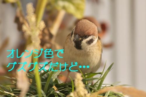 050_20150110013738fc9.jpg