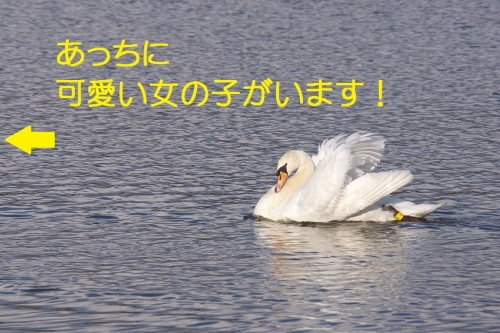 060_201501052113439d7.jpg