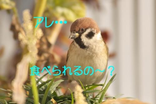 060_2015011001381127e.jpg