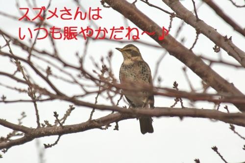070_20150106180625d9e.jpg
