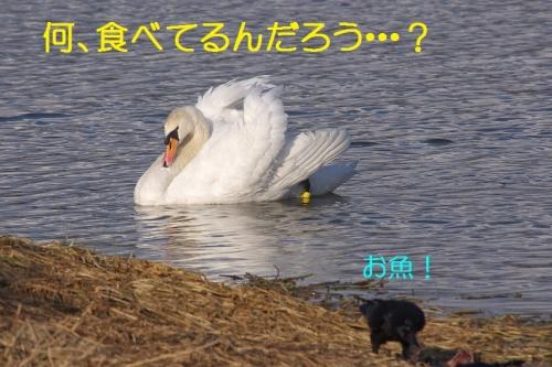 080_20150105211350e8b.jpg