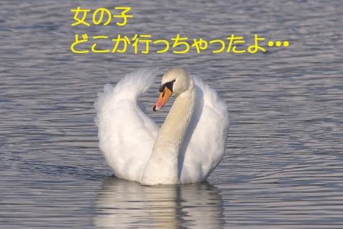 090_20150105211350f3b.jpg