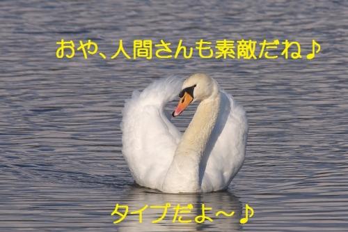 100_2015010521135115a.jpg