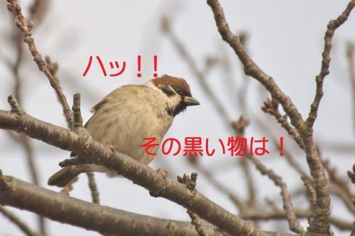 100_201501061806282fc.jpg
