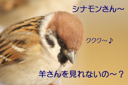 115_20150101203204f14.jpg