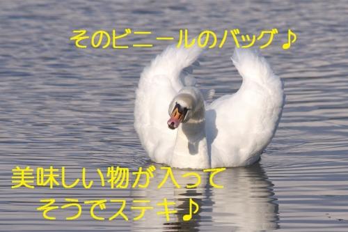 120_20150105211429f97.jpg