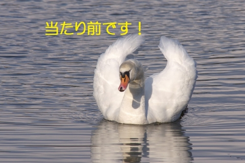 130_20150105211428cb3.jpg
