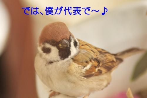 140_20141230205750ff4.jpg