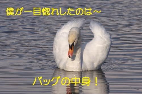 140_20150105211431283.jpg