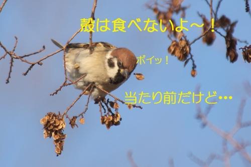 140_20150112205731098.jpg
