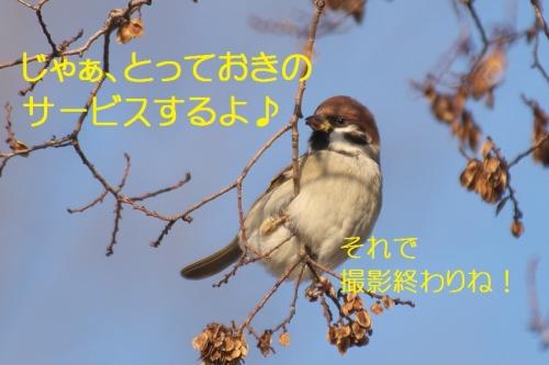 150_201501122057368ff.jpg