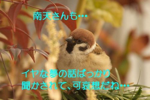 160_20150103185142e1f.jpg