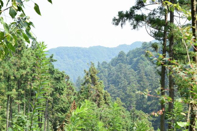 高尾山 1号路 景色4