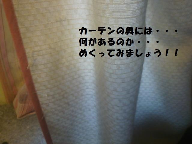 DSC_1493.jpg