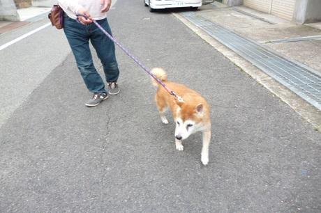 父との散歩
