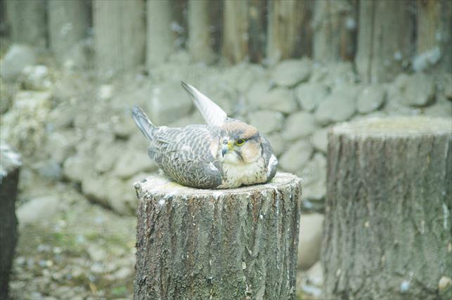 アルマトイの動物園 (5)_R