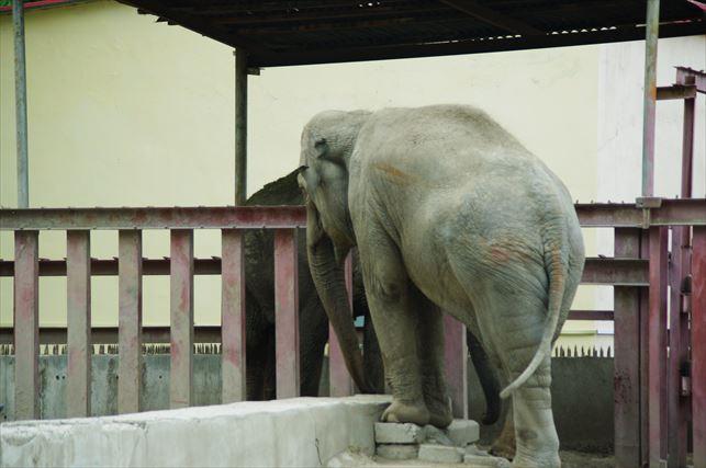 アルマトイの動物園 (25)_R