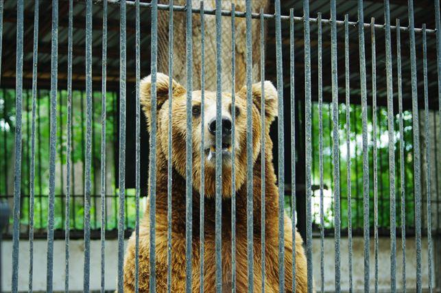 アルマトイの動物園 (30)_R