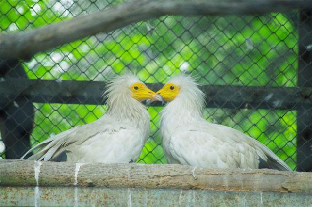 アルマトイの動物園 (58)_R