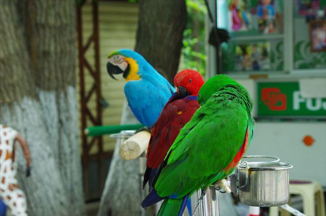 アルマトゥイの動物園 (4)
