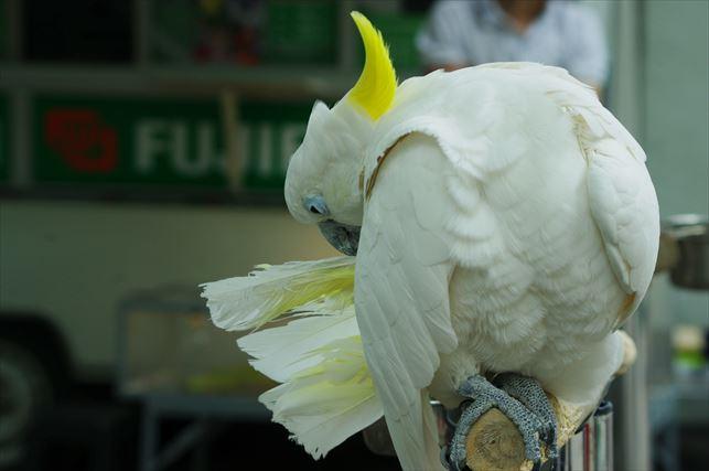 アルマトゥイの動物園 (5)