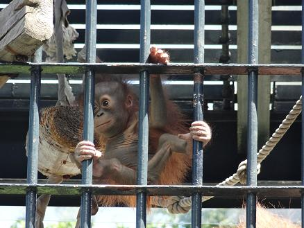 2015年7月16日旭山動物園もか②