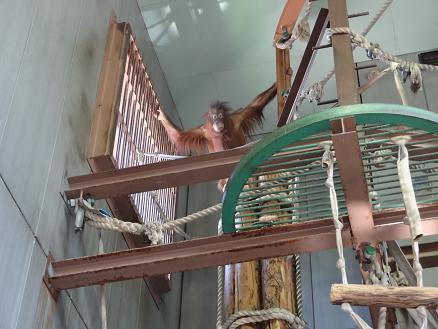 2015年7月16日旭山動物園もりと