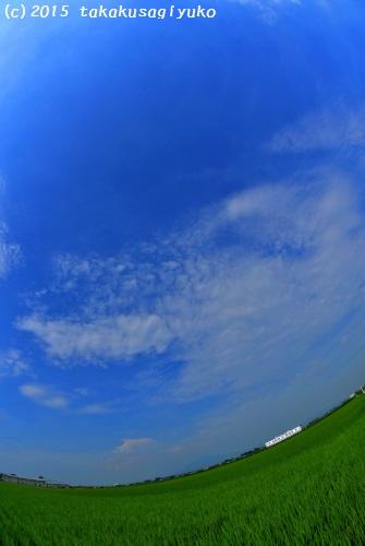 DSC_4302_01.jpg