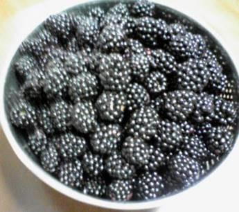 ブラックベリー収穫物7月