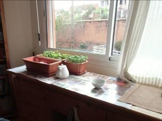 窓際の様子とカイワレ栽培