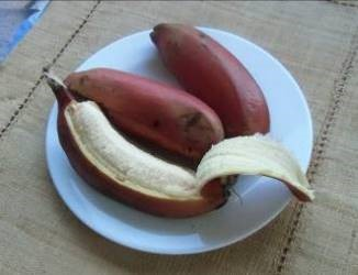 赤い皮のバナナ