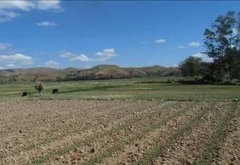 マダガスカルの山と田