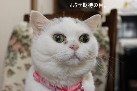 タマちゃん ホタテ期待の目