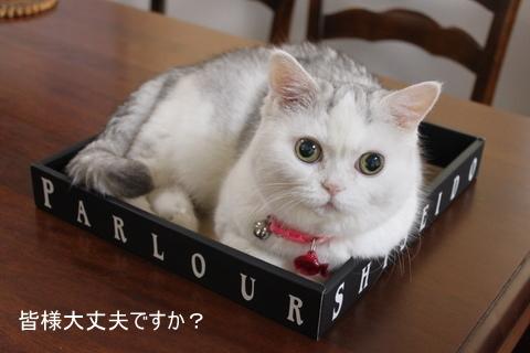 タマちゃん 資生堂 箱