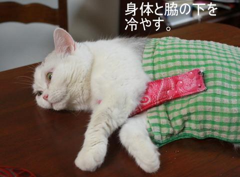 タマちゃん暑い 冷やす