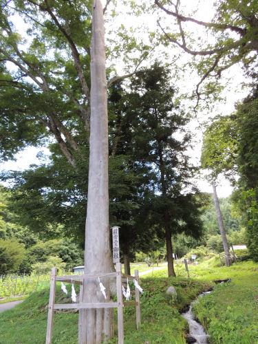 150718suwa59.jpg