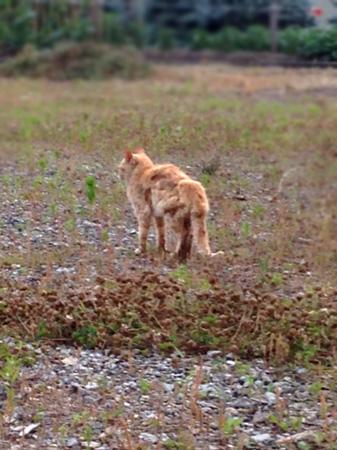 山南猫2015.6③