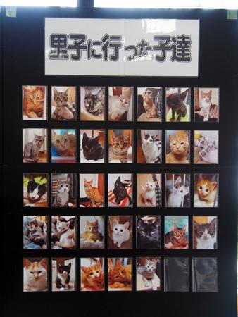 譲渡会2015.7⑥