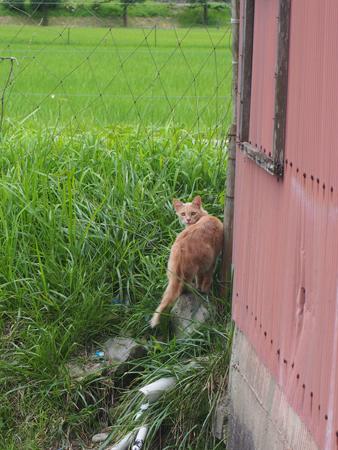 青垣外猫①2015.7.27