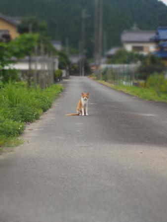 青垣外猫②2015.7.27