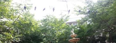 電線の鳩たち
